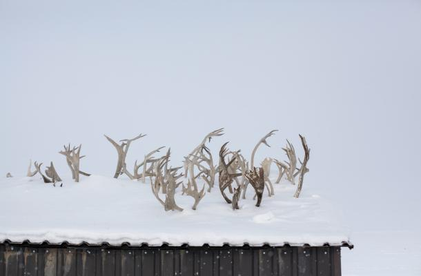 Antlers decorate a roof in Tuktoyaktuk.